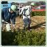 植栽維持管理の詳細ページへ